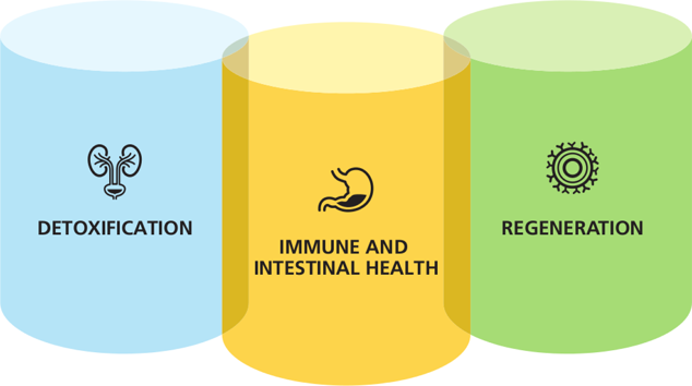 Detoxification, Immune and intestial health, regeneration